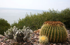 Cactus garden by the sea Royalty Free Stock Photography