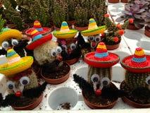 Cactus messicani Fotografia Stock