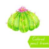 Cactus messicano con il fiore rosa Illustrazione del quadro televisivo delle mani dipinte un cactus Fotografia Stock Libera da Diritti