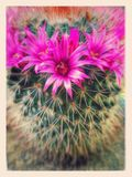Cactus met bloem Stock Afbeeldingen