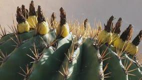 Cactus met Bloemen stock footage