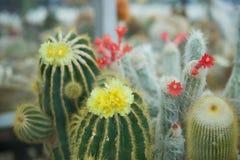 Cactus met grote groene doornen royalty-vrije stock afbeelding