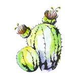 Cactus met hand-drawn bloemen, stock illustratie