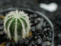 Cactus met hart Stock Afbeelding