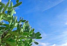 Cactus met weerhaken en blauwe hemel stock fotografie