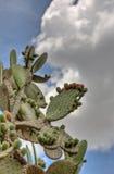 Cactus met Zachte Wolk Backgound royalty-vrije stock afbeeldingen