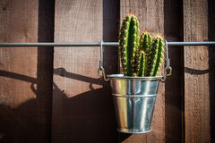 Cactus in metal bucket Royalty Free Stock Photography
