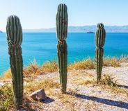 Cactus in Mexico Stock Images
