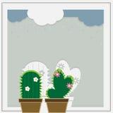 Cactus mignon Photo libre de droits