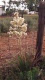 Cactus in mijn tuin royalty-vrije stock afbeelding