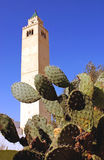 Cactus and minaret - Tunis - Tunisia royalty free stock images