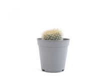 cactus in mini plastic pot Royalty-vrije Stock Foto's
