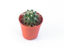 cactus in mini vaso di plastica Immagine Stock Libera da Diritti