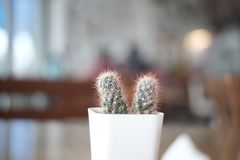 Cactus minimal style life. Concept on color background detail. stock photo