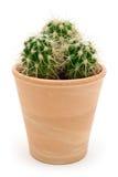 Cactus mis en pot Images stock