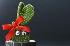 Cactus mis en pot drôle d'oreilles de lapin de microdasys d'opuntia avec les yeux écarquillés devant le fond foncé image libre de droits