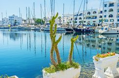 The cactus in Monastir port. The cactus grows in pot on embankment of yacht port of Monastir, Tunisia stock photography