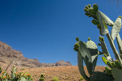 Cactus and mountains Stock Images