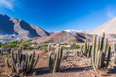 Cactus and Mountains. View of cactus with Andes mountains in the background in the Elqui Valley in Chile Royalty Free Stock Image