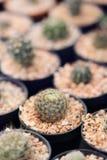Cactus nacional Imagen de archivo