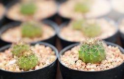Cactus nacional Fotografía de archivo