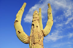 Cactus National Monument, Royalty Free Stock Photo