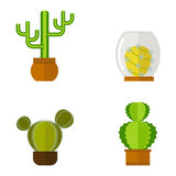 Cactus nature desert flower green mexican succulent tropical plant cacti floral vector illustration. Stock Photography
