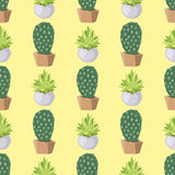 Cactus nature desert flower green mexican succulent tropical plant seamless pattern cacti floral vector illustration. Stock Photos