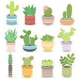 Cactus nature green succulent tropical plant vector illustration. Stock Photos