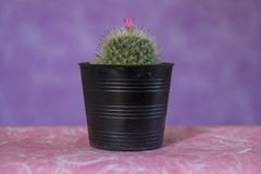 Cactus 14 royalty free stock images