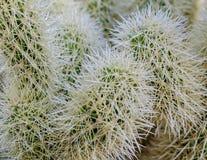 Cactus nazionale in Nevada Cactus Nursery fotografia stock libera da diritti