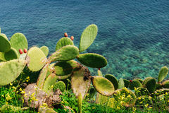 Cactus near the sea Royalty Free Stock Photography