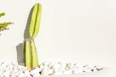 Cactus near white wall in Santorini, Greece Stock Photos