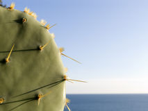 Cactus with needles Stock Images