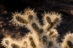 Cactus Needles Backlit by Sunset Stock Photo