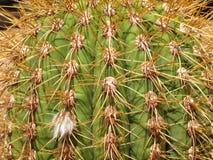 Cactus needles stock image