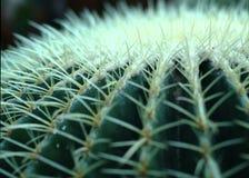 Cactus needles closeup Royalty Free Stock Photos