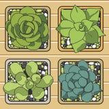 Cactus nei vasi Illustrazione di vettore Illustrazione di Stock