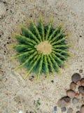 Cactus nel giardino Fotografie Stock