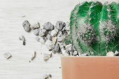 Cactus nel mio giardino Immagine Stock Libera da Diritti