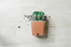 Cactus nel mio giardino Fotografia Stock