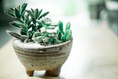 Cactus nel mio giardino Fotografie Stock