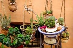 Cactus nel vaso Fotografia Stock