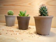 Cactus nell'ambito della luce Fotografia Stock