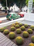 Cactus nella città Fotografia Stock