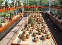 Cactus nella serra Immagini Stock