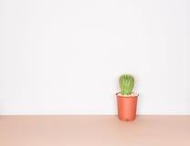 Cactus nello stile di minimalismo Fotografia Stock