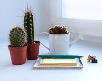 Cactus with a notebook on window in office Stock Photo