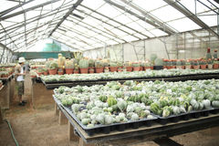 Cactus nursery Stock Photography
