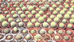 Cactus in the nursery stock video